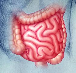 intestine and gut