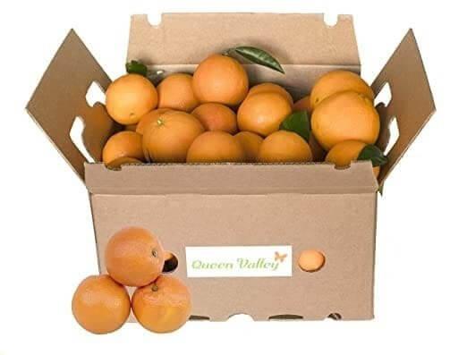 5-kg-Orangen-zuviel-des-Guten